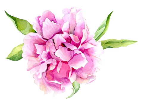 watercolor tattoo peony pink peony flower print of original watercolor painting