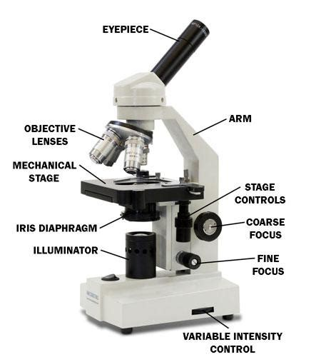 what part of the microscope regulates the amount of light the microscope lesson 0362 tqa explorer