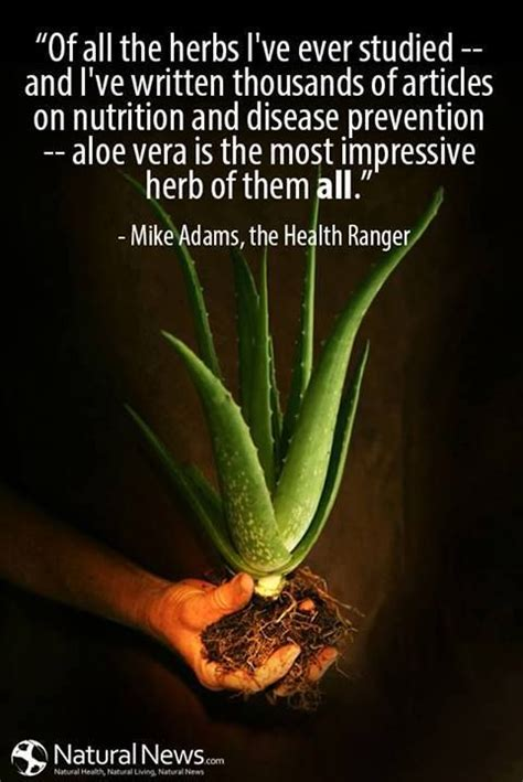 quotes for the herb kitchen quotesgram herbs quotes quotesgram