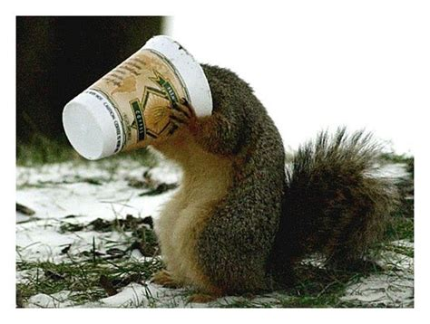 17 Best images about Animals Love Coffee, Too on Pinterest   Owl, Boxer puppies and Drinking coffee