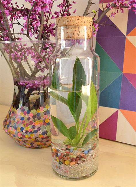 Living Room Bedroom Ideas diy easy water terrarium