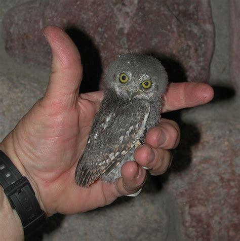 Texas Barn Owls The Good Life Bird Houses And Owls