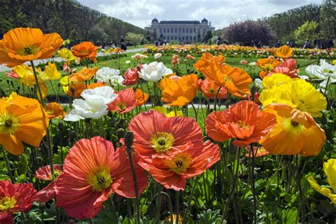 Austerlitz Jardin Des Plantes