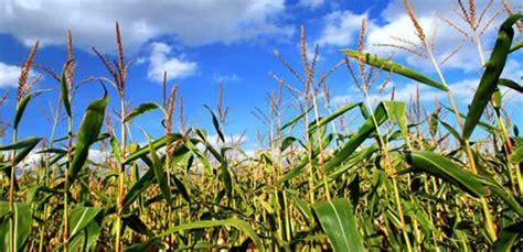 imagenes satelitales uso agropecuario experto sugiere usar sat 233 lite para censo agropecuario