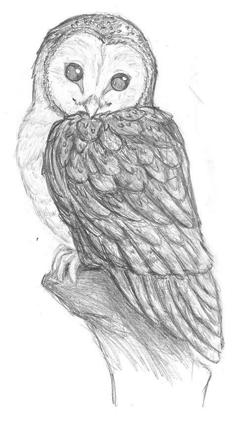Pegasusqueen Barn Owl Pencil By The Snow Fox On Deviantart Barn Owl Drawing