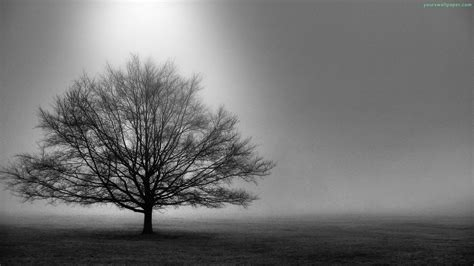 white tree tree black and white hd background wallpapers 4253