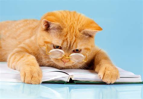 Imagenes De Gatitos Inteligentes | las razas de gatos m 225 s inteligentes miscota