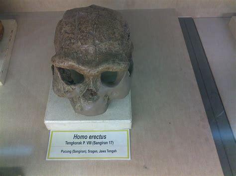 Fosil Kerang Purba ada dinosaurus t rex di museum geologi bandung catatanku