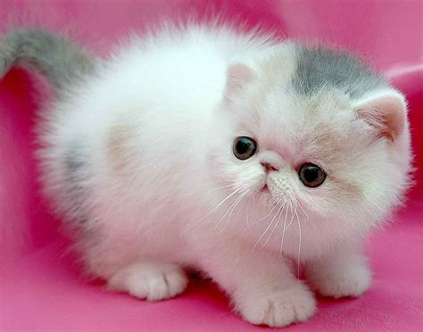 Cat Pink small cat on a pink background wallpapers and images wallpapers pictures photos