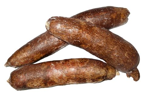cassava png image pngpix