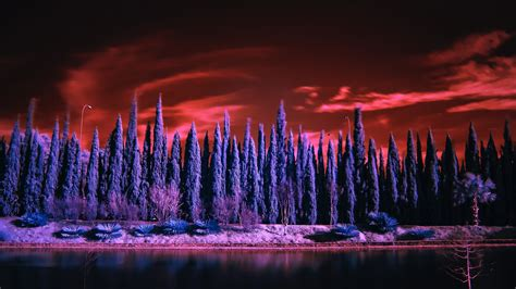 wallpaper cypress trees lake infrared  nature