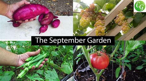 fall gardening the september garden plenty of harvests fall gardening