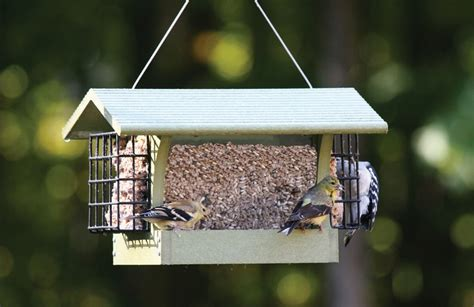 wild birds unlimited oriole feeder birdcage design ideas
