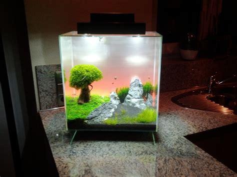 aquarium design edge fluval edge feine wasserwelten im nano aquarium wz de