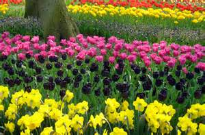world s best places to see beautiful flowers smartertravel
