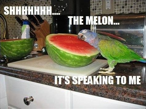 Funny Bird Memes - funny parrot pictures with captions 30 animal pictures