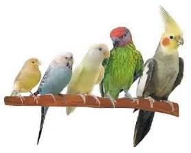 an ode to birds