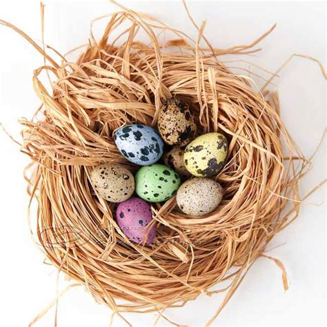 easter photo eggs nest home decor still pink yellow