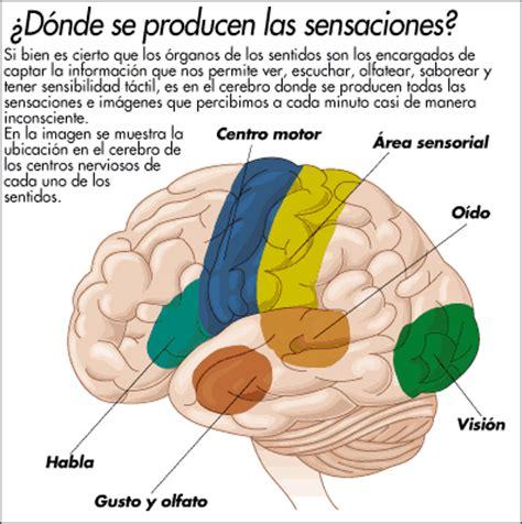 imagenes visuales para el cerebro organos de los sentidos