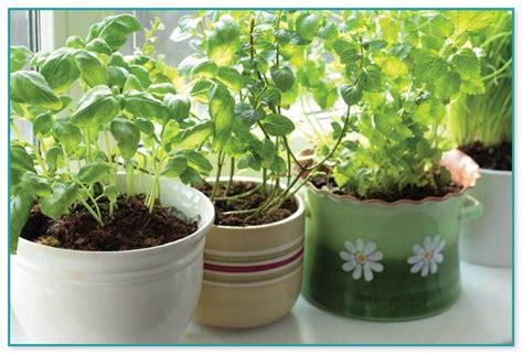 container herb garden kit indoor plants with flowers