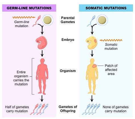 Modification Utation by Sources Of Variation Genes