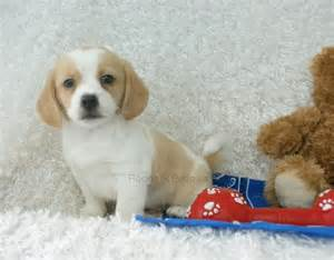 prince peagle rockin r puppies