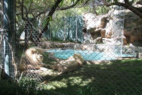 secret garden dolphin habitat at the mirage picture of