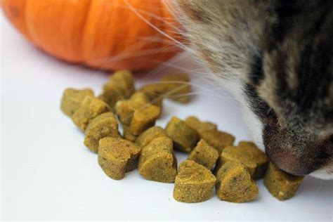 pumpkin for constipation 17 best images about cats and their on mouse traps cats and cat health