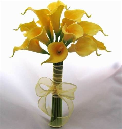 significato fiori calla il significato della calla significato fiori calla