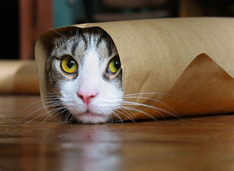 Cat Wallpaper Rolls | funny pets pictures lol pics in snow tumblr in costumes to