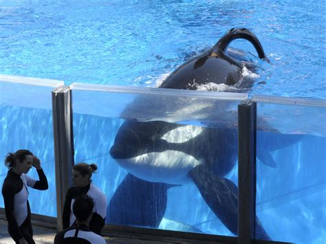 Kail Orca Bu 01 five concerning controversies from our earth s zoos guide