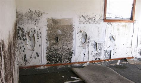 what causes mould on bedroom walls how to remove black mold from carpet and walls