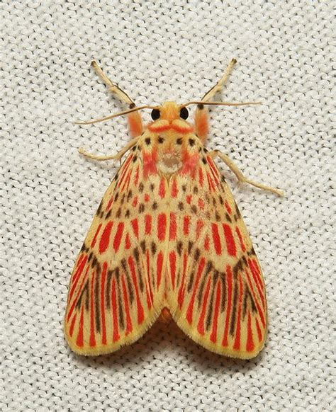 patterns in nature butterflies 17 best ideas about moth on pinterest beautiful