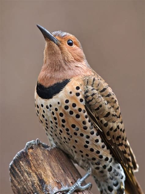 indiana backyard birds 1000 images about nature on pinterest northern cardinal