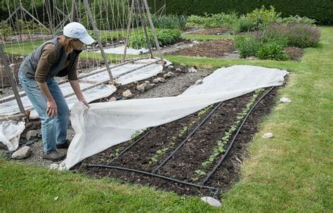 Garden Row Covers by Floating Row Covers Island Kitchen Gardens