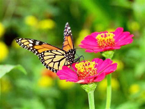 Pengorbanan Seekor Kupu Kupu aku hidupku kaktus dan kupu kupu buat diriku