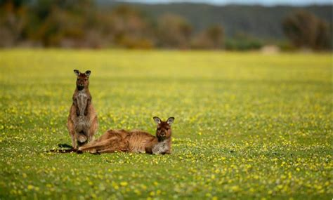 Babylon Cottage Kangaroo Valley by Australia Archives Swain Destinations Travel