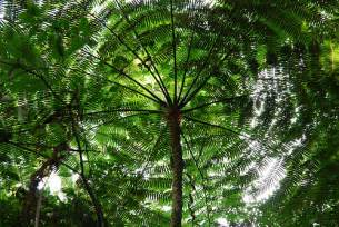 Canopy Information Rainforests Facts For Nature 171 Kinooze