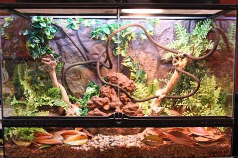 plants for reptiles and hibians