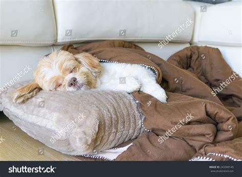 how to sleep comfortably on the floor dog sleeping comfortably on floor living stock photo