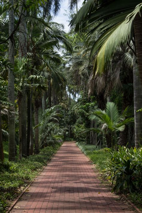 Durban Botanical Gardens Durban Botanic Gardens Enthusiastic Gardener
