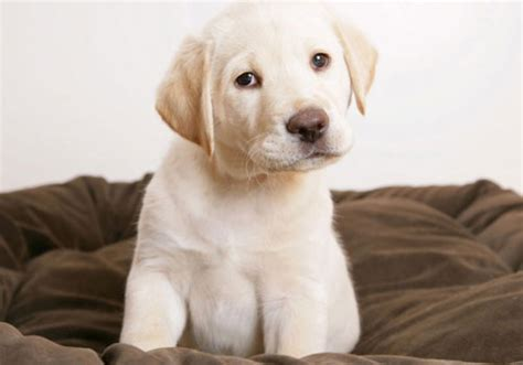 confused puppy 33 pictures of puppies you will surely creativefan
