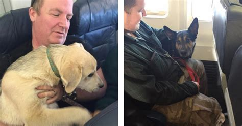 dogs on planes the reason why airlines let dogs fly on planes will restore your faith in humanity