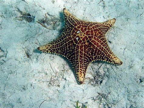 starfish images wallpapers starfish wallpapers