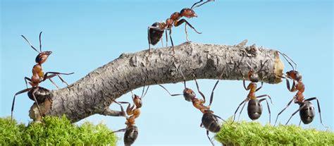 Ameisen Im Garten Was Tun 4081 by Ameisen Bek 228 Mpfen Im Garten Auf Dem Rasen Und Im Haus