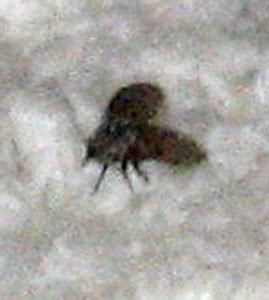 large black flies in bathroom flea extermination prices get rid of tiny ants in home