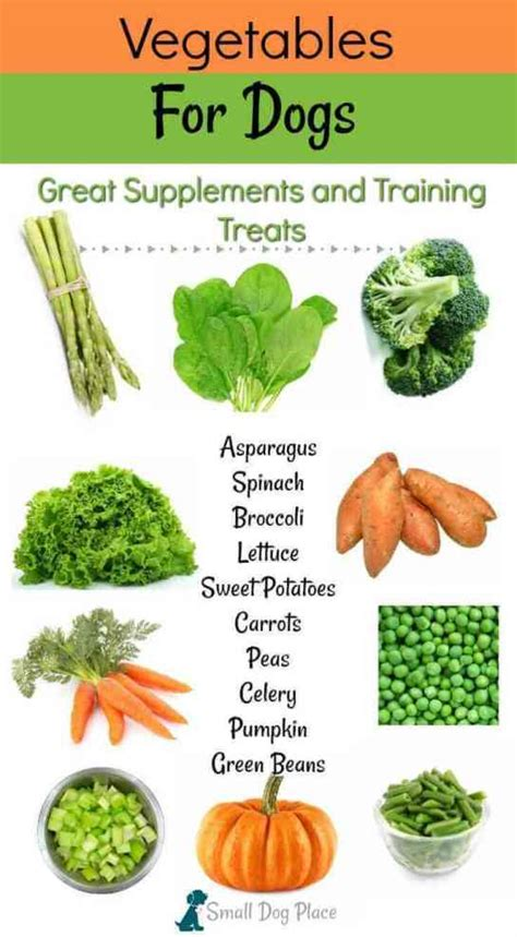 vegetables for dogs vegetables for dogs nutritious choices for supplements