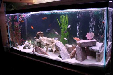 fish decor for home cichlid aquarium decorations decor ideasdecor ideas