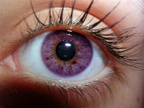 purple eye color 25 best ideas about violet eyes on pinterest purple
