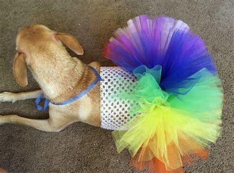 rainbow dogs rainbow tutu rainbow pet tutu rainbow dress rainbow